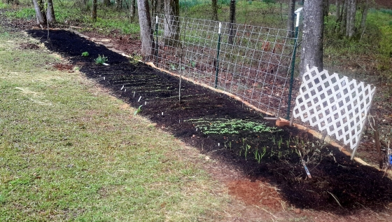 The full no-till garden bed. Spring veggie garden in front, with the new medicinal herb garden extension in the back.